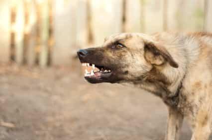 Defending Against Attacking Animals