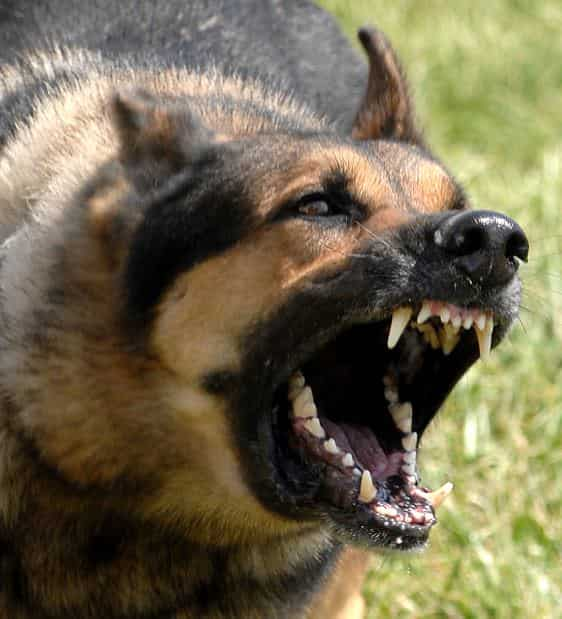 Attack By A Dangerous Dog and the Use of Deadly Force - USA