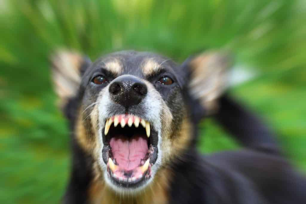 Options To Protect Yourself From Aggressive Dogs