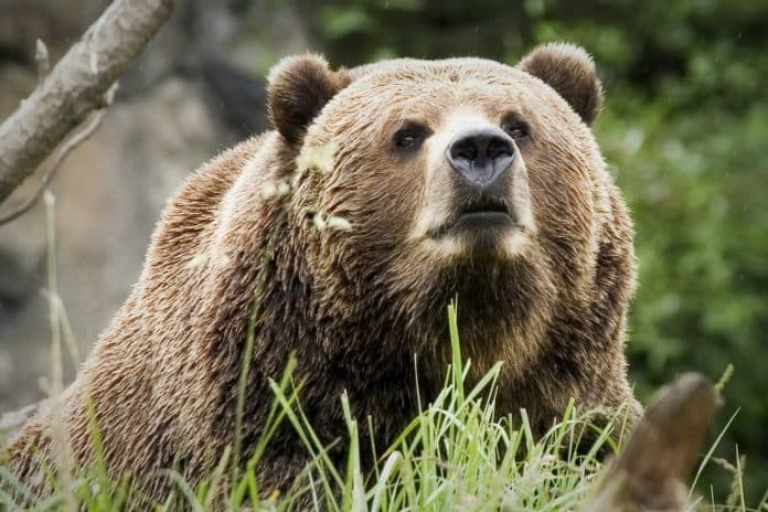 Man Charged After Warning Shot To Protect Dog From Bear