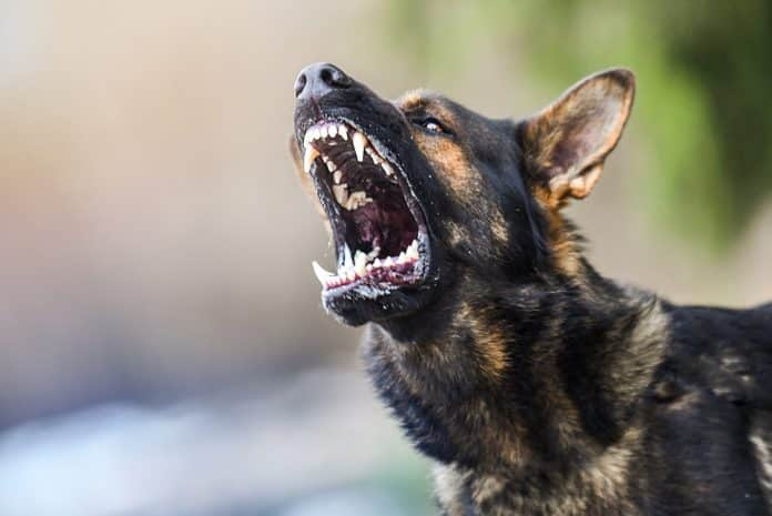 Argument Leads To Concealed Carrier Shooting Dog