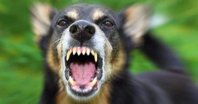Man Shoots Neighbor's Attacking Dog In Self-Defense