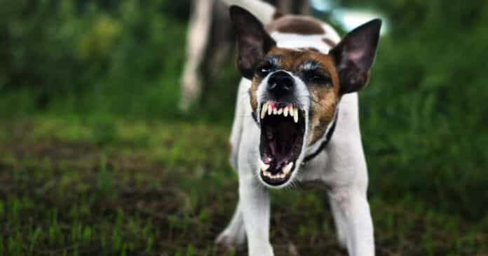 Aggressive Dogs: Understanding and Dealing With This Threat