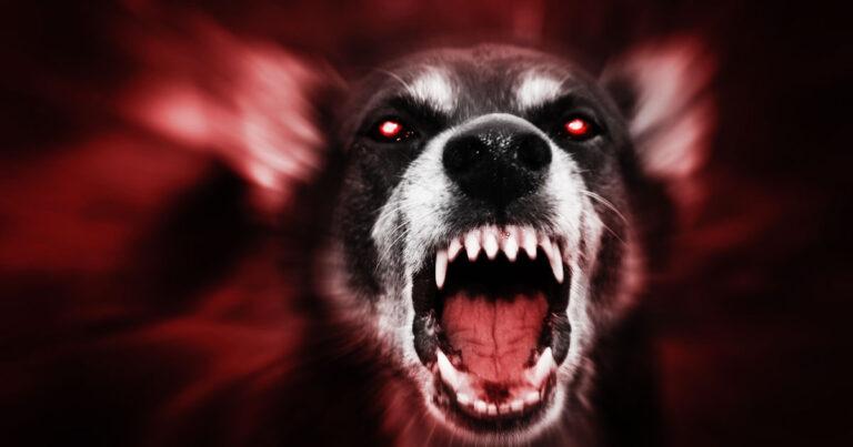 Burglar Shot At By Homeowner Then Bitten by Dog