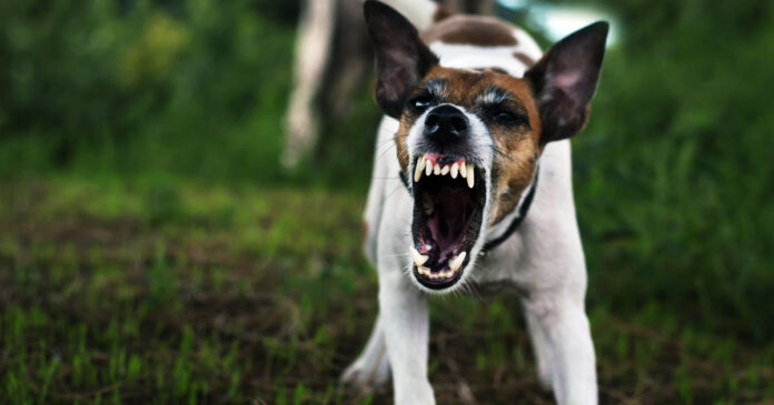 Neighbor Shoots Couple's Dog After It Attacked Them